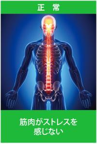背骨・骨盤が正しい位置-1